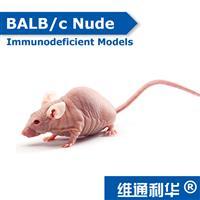 BALB/c Nude SPF