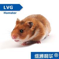 LVG Hamster