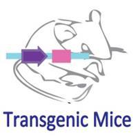 转基因小鼠订制