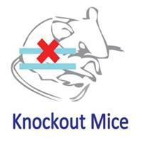 基因敲除小鼠定制