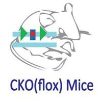 条件性基因敲除小鼠定制