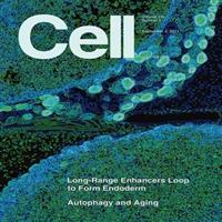 细胞系基因修饰