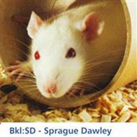 BKL:SD – Sprague Dawley大鼠