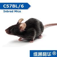C57BL/6