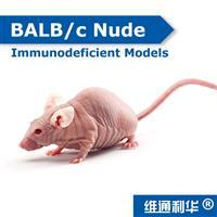 BALB/c Nude Crlj