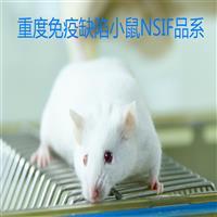 人源化肝脏小鼠NSIF
