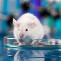 CRISPR/Cas9组成型KI大小鼠